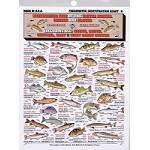 Tightline Publications - Freshwater Identification Chart #8